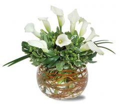 Mini Cala Lily Garden