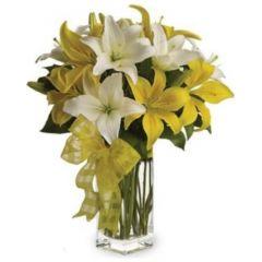 Pick a Lily